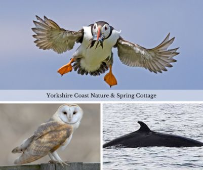 Wildlife in Yorkshire – Go Explore
